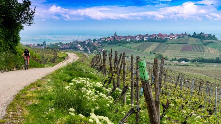 Découvrez le vignoble alsacien en vélo
