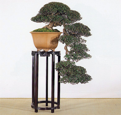 Model Pot Bonsai Bonsaibiker