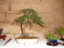 2006 - expo blaye - 002