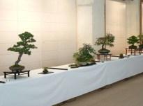 2010 -expo saint remi - 010