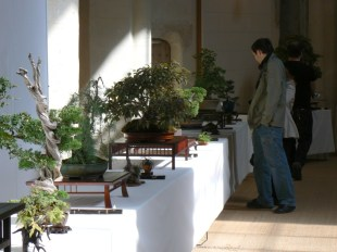 2010 -expo saint remi - 014