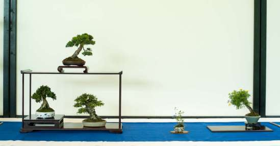 Shohin display, Morten Albek