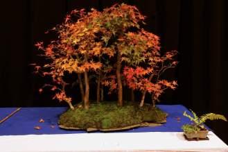 047-aase-w-jap-ahorn-skov