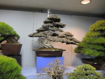 Kokufu Ten 2013 JS (1)
