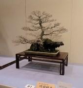 Kokufu Ten 2013 JS (21)