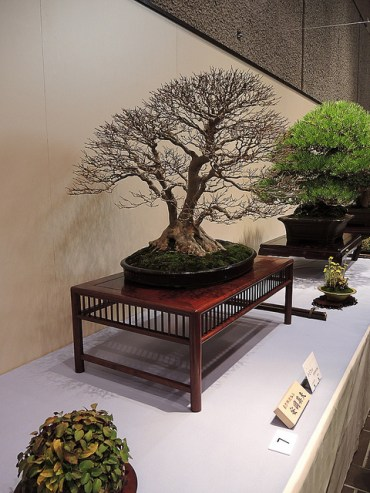Kokufu Ten 2013 JS (5)