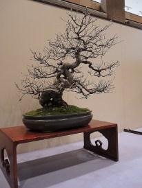 Kokufu Ten 2013 JS (74)