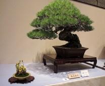 Kokufu Ten 2013 JS (83)