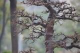 Beautiful back branche - La branche arrière est sublime