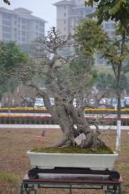 Guangzhou penjingi exposition 065