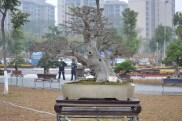 Guangzhou penjingi exposition 070