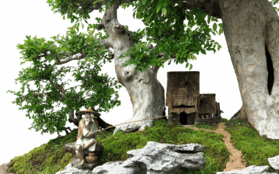 3 Essential Tips in Caring for a Trident Maple Bonsai Tree