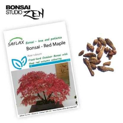 Acer Rubrum zaden