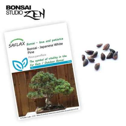 Pinus parviflora zaden