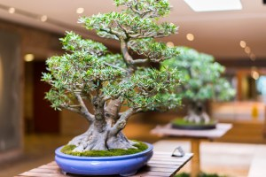 Bonsai Care for Beginners