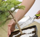 Vital Tools to Care for Your Bonsai. There are many bonsai tools that are used when designing and caring for your bonsai trees.