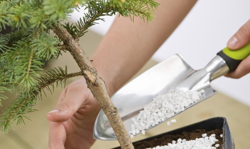 Vital Tools to Care for Your Bonsai