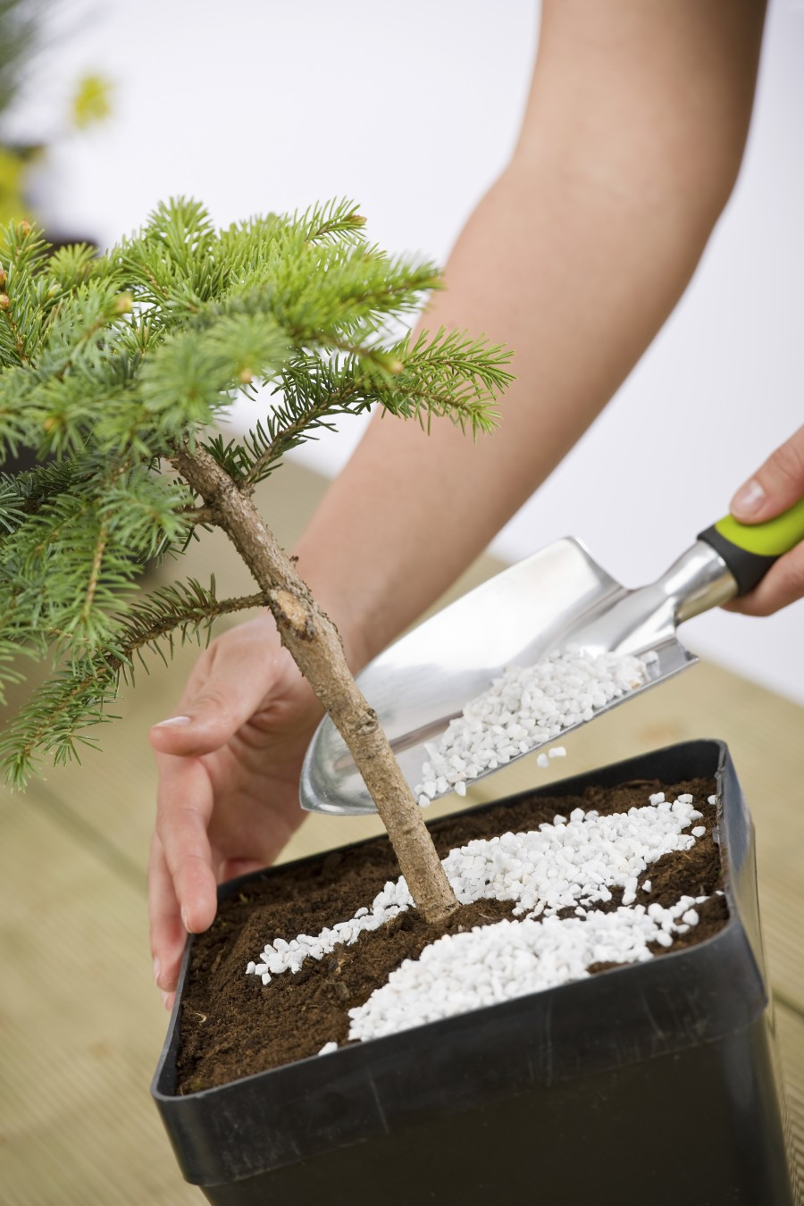 Vital Tools to Care for Your Bonsai.There are many bonsai tools that are used when designing and caring for your bonsai trees.