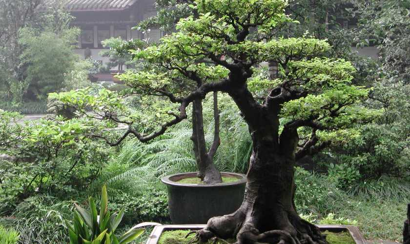 The Art of Growing a Bonsai