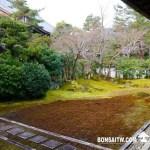 [日本庭園]清涼寺(2)