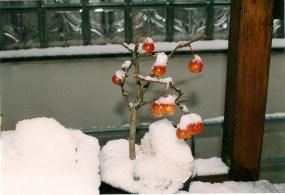 Apfel 2001, Januar