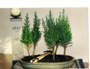 Lebensbaum-Wäldchen 2002