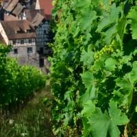 Bonnes adresses de viticulteurs à Riquewihr et environs