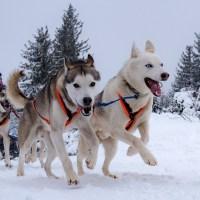 Grande course de chiens de traîneau au Lac Blanc, le 13 & 14 Janvier 2017