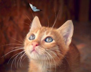 Echantillon : croquettes de chat Josera