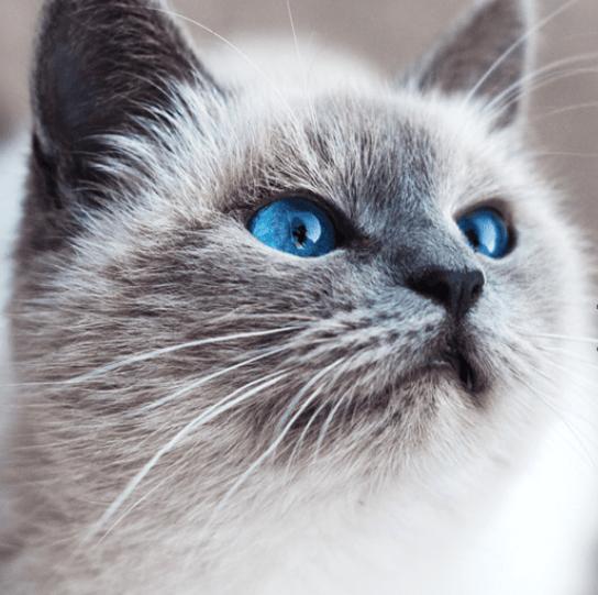 Echantillon  de croquettes pour chat ou chien Husse