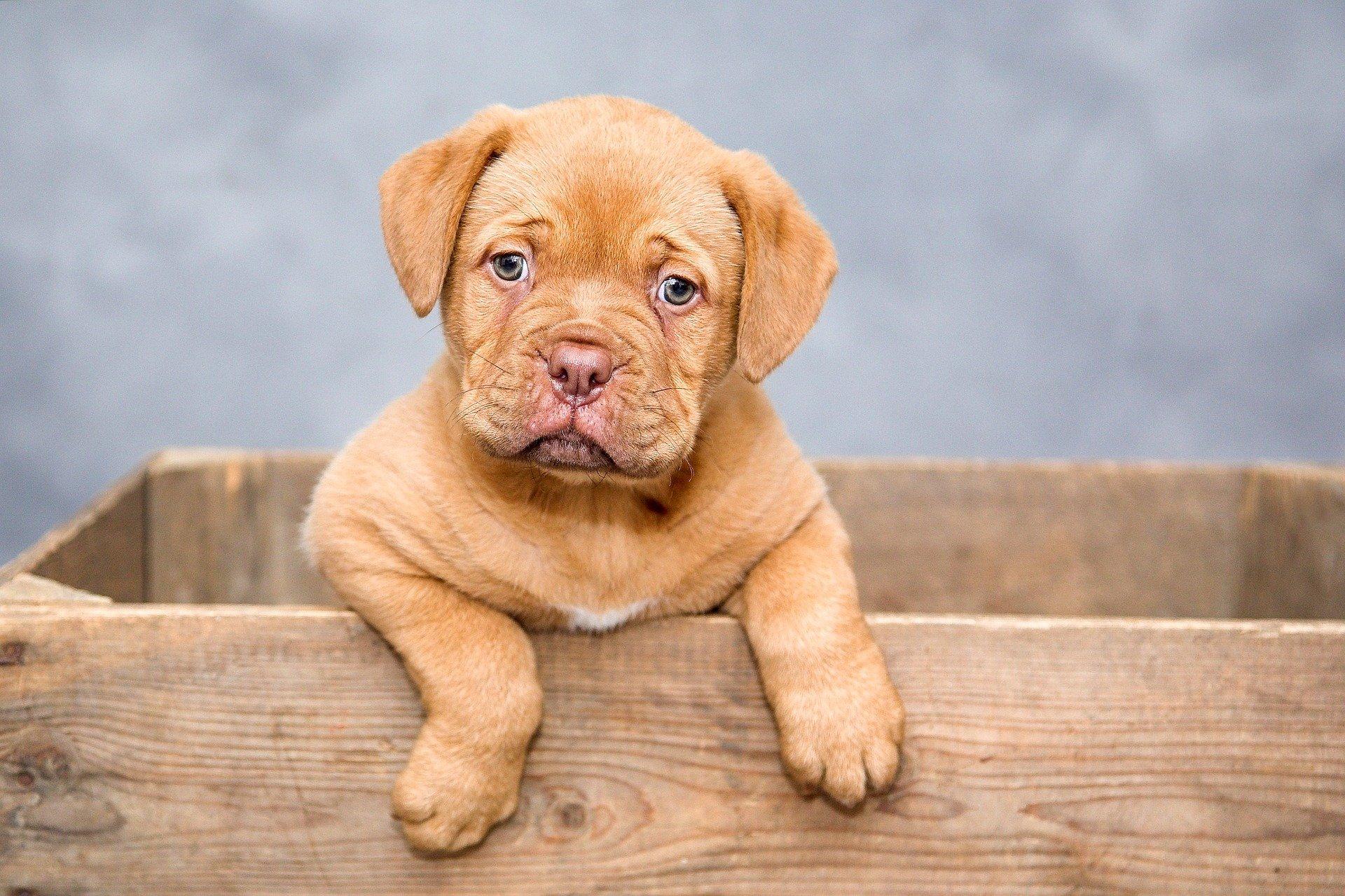 Un mois de croquettes pour chien pour 2€ livraison incluse !