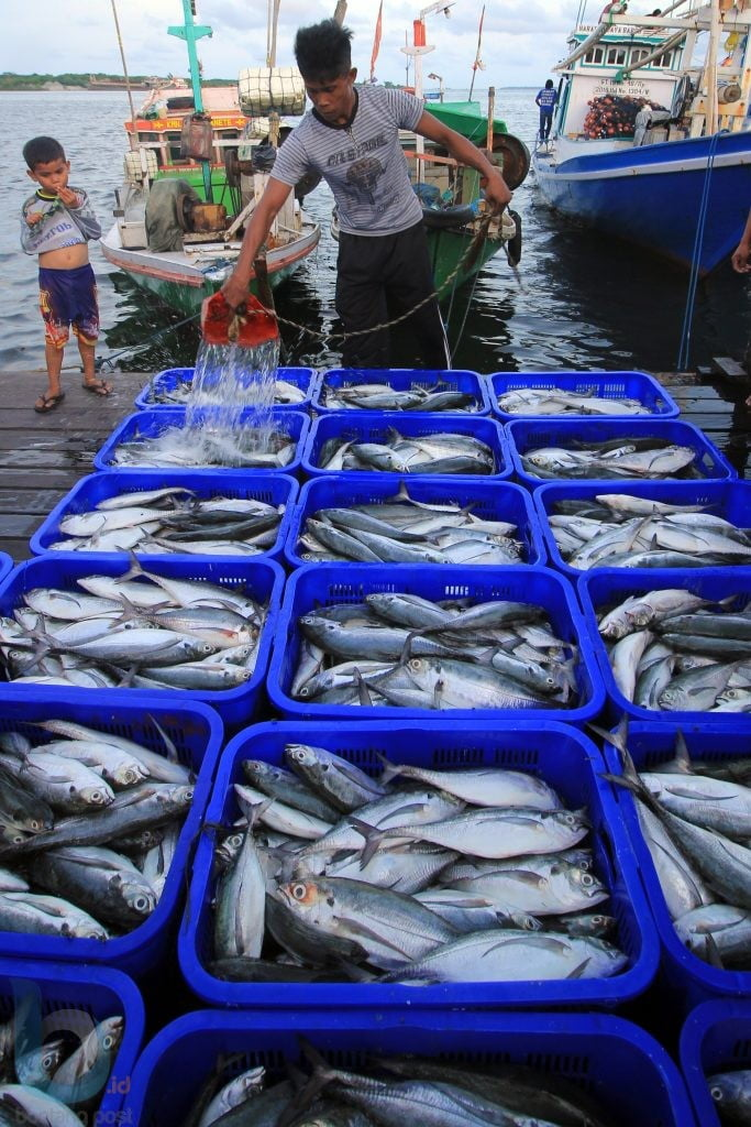 Ribuan hasil tangkapan ikan segar. (FOTO: FAHMI FAJRI/BONTANG POST)