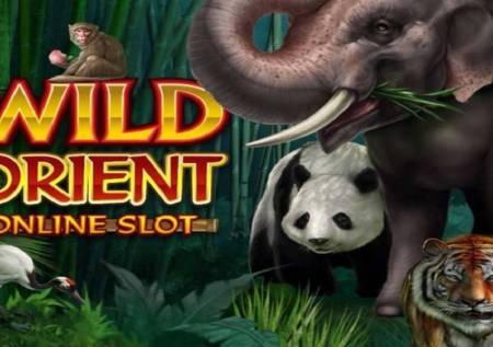 Wild Orient – džungla krije divlje kazino bonuse