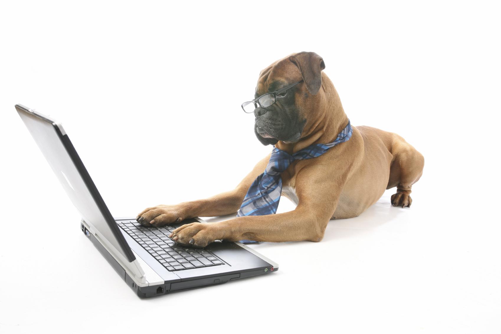 A dog essay