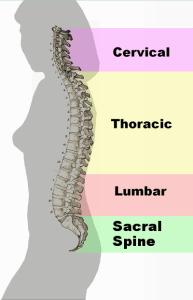 back friendly exercises