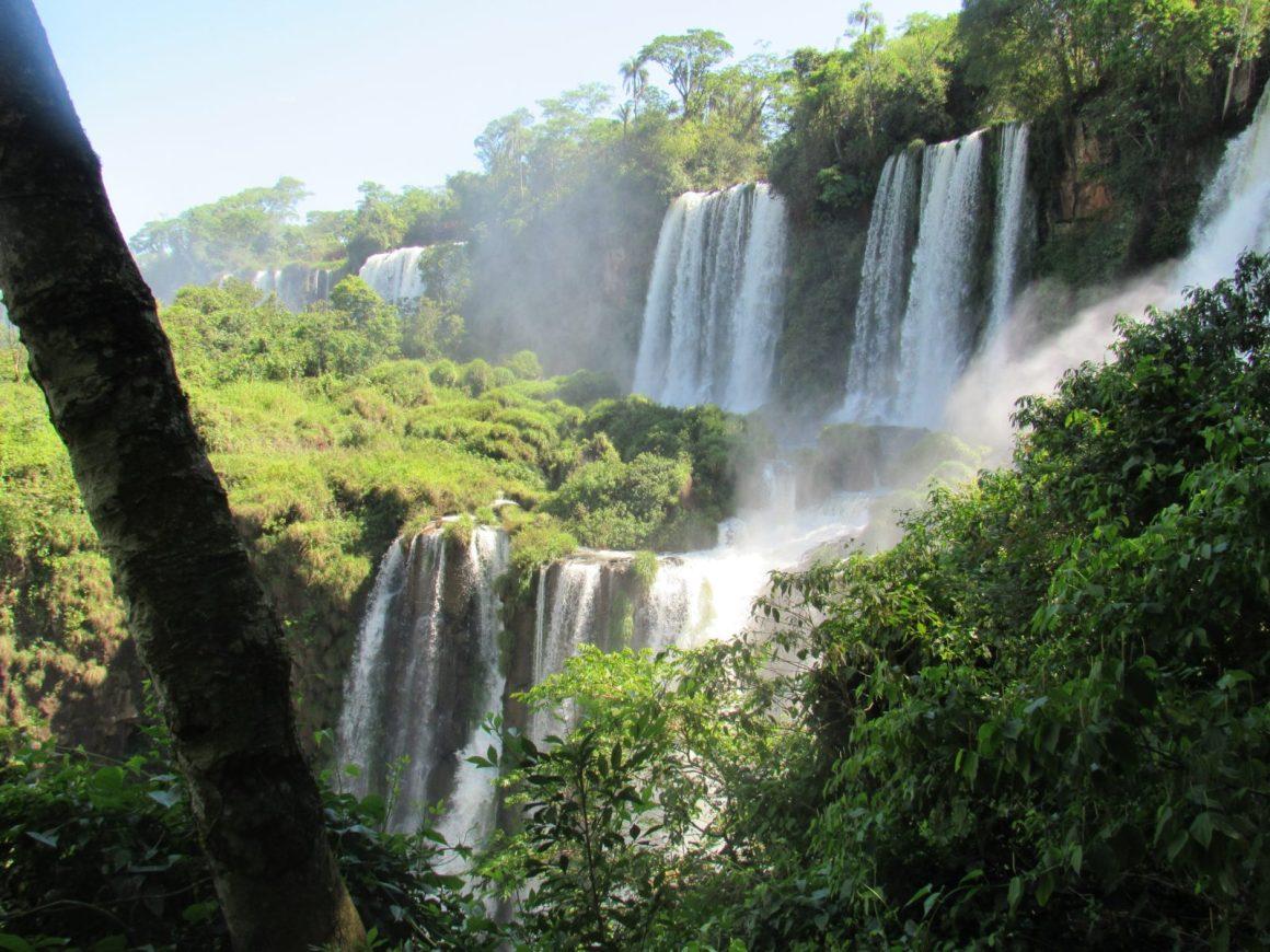 green trees surrounding waterfalls