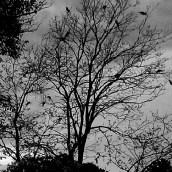 Twilight birds une...x