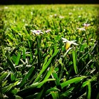 Spring has sprung, the grass is ris'...x