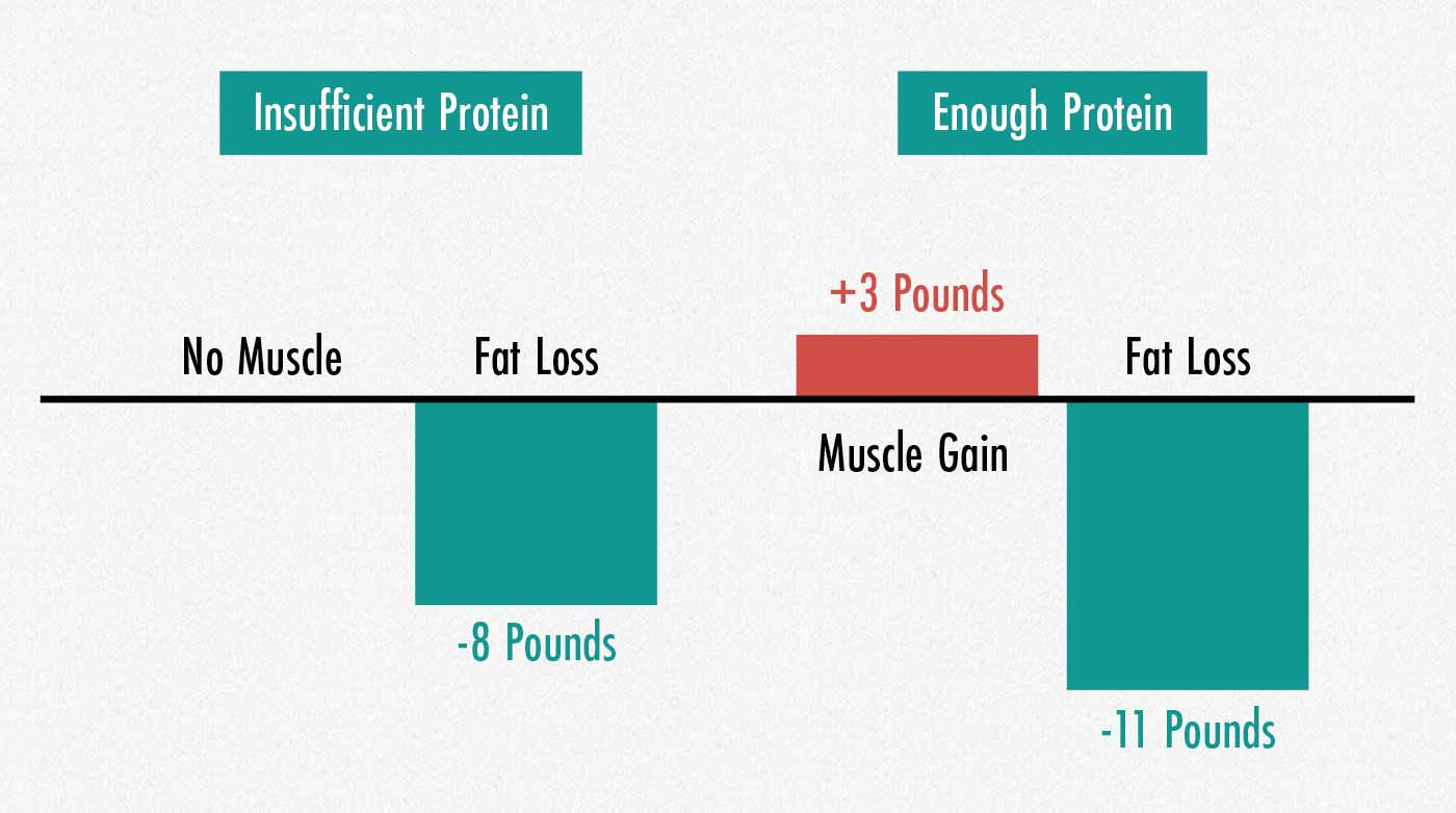 Graph showing that eating enough protein causes muscle growth and fat loss.