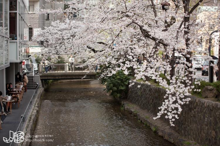 高瀨川打燈 賞櫻 夜櫻 無料開放