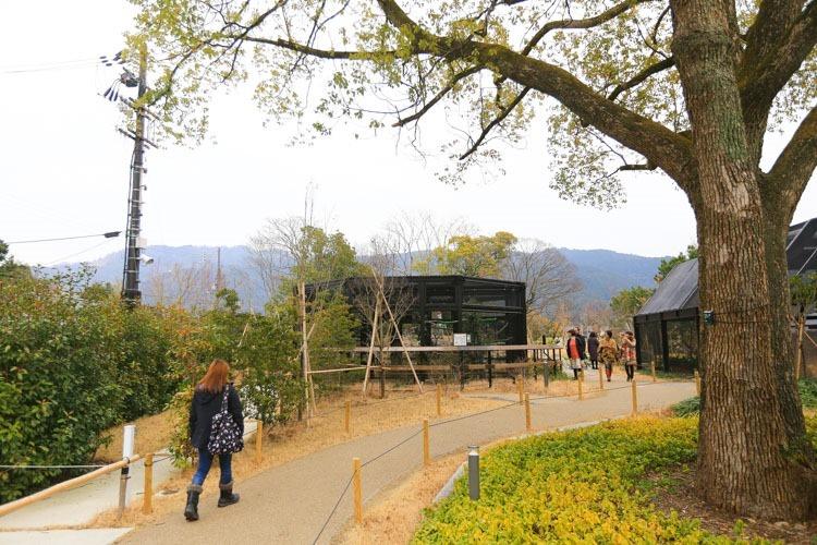 京都 動物園 (25 - 78)