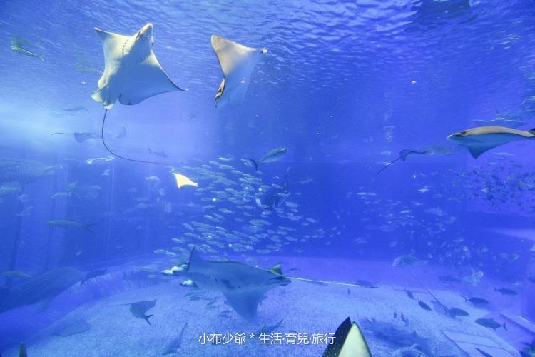 沖繩 北部 美麗海 親子遊-120