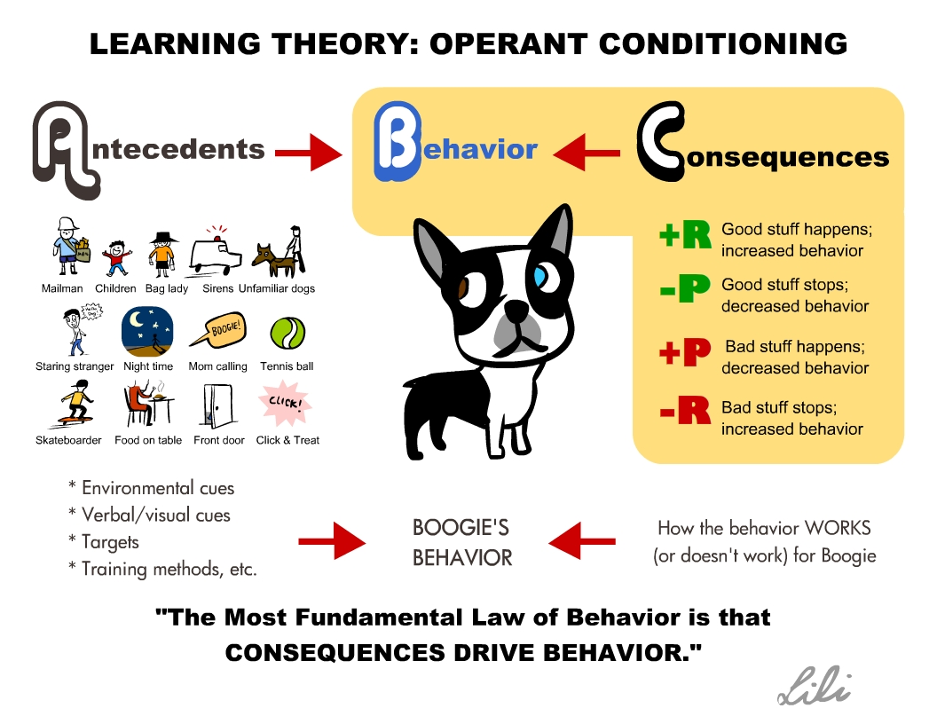 Classical Conditioning Notes From Clicker Expo