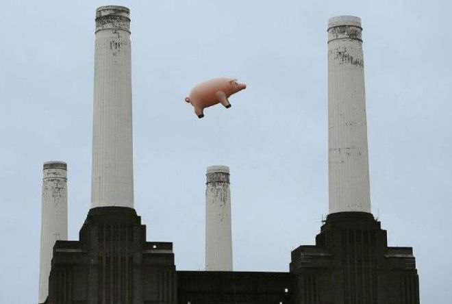 giant inflatable pig