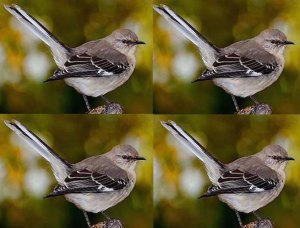 mockingbird-montage