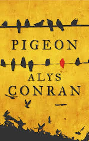 Pigeon by Welsh author Alys Conran,