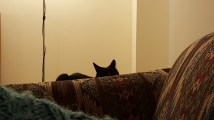 """G: """"Yes, I am watching you. Intruder."""""""