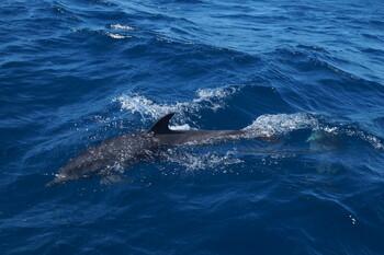 Экологи: в Крыму возросло число погибших дельфинов