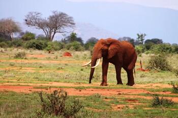 Кения готова принимать иностранных туристов без карантина