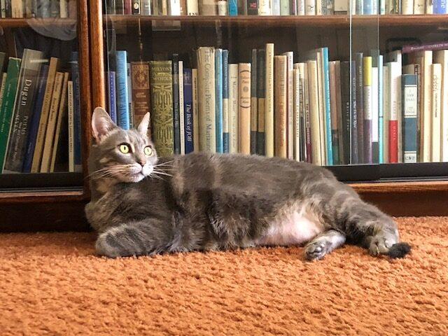 Puss in Books